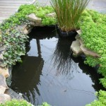 Beautiful Fish Pond Design In Home Garden