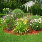Beautiful Plants Idea For Home Garden