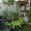 Colorful Plants Idea For House Garden