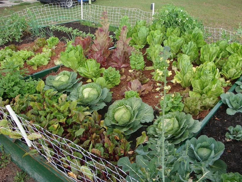 Simple Home Vegetable Garden Idea Picture - 4 Home Ideas