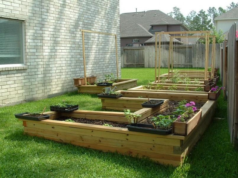 Fruit And Vegetables Combination In Home Garden
