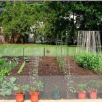 Minimalist Vegetables Garden In Minimalist Home