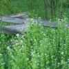 Mustard Plants Idea For Minimalist Garden