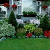 Plants Choice For Modern Home Garden
