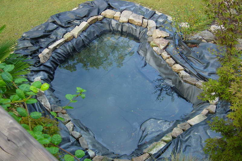 Simple Fish Pond For Minimalist Garden