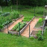 Simple Home Vegetable Garden Idea Picture