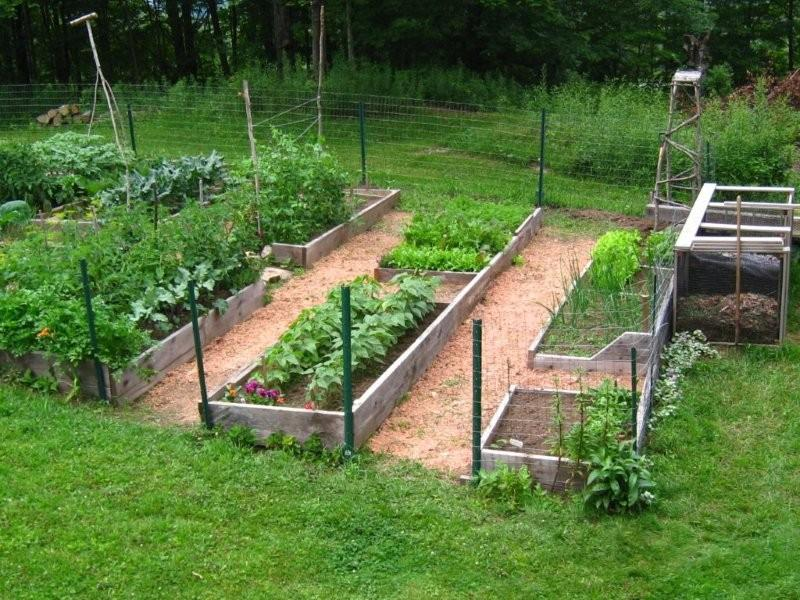 Simple home vegetable garden idea picture 4 home ideas for Fruit and vegetable garden design