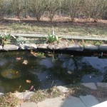 Small Fish Pond Idea For Home Garden
