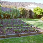 Vegetables Idea For Home Garden Design