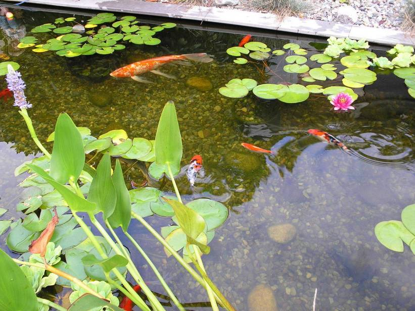Fresh Minimalist Fish Pond Design Photo