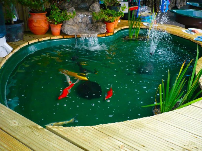 Minimalist Home Indoor Fish Pond Idea