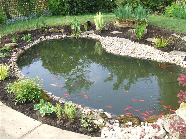 Nice Home Fish Pond Decor Image