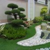 Plants Design Idea For Home Garden