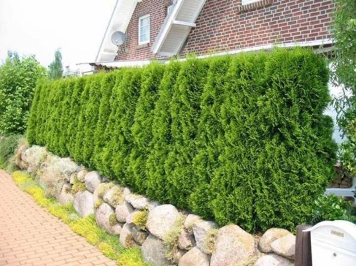 Japanese Holly Home Fence Model