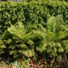Tips To Build Fern Fence Design