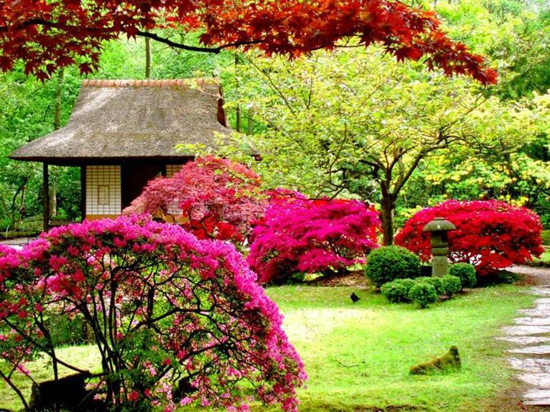 Organizing garden at home tips 4 home ideas for Colorful plants for landscaping