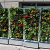 Colorful Vertical Garden Decorating Idea