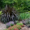 Decorate Home Garden With Pennisetum Purpureum