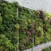 Make Vertical Garden In A Narrow Land