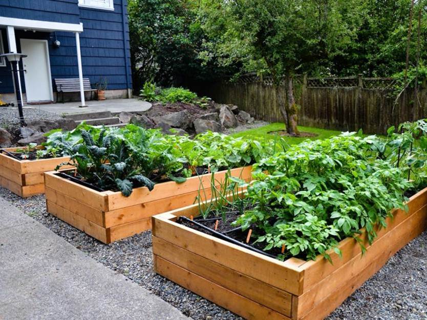 Tips To Make Urban Garden In Small Area