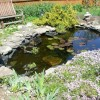 Backyard Garden With Small Pond