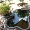 Beautiful Home Garden With Fish Pond