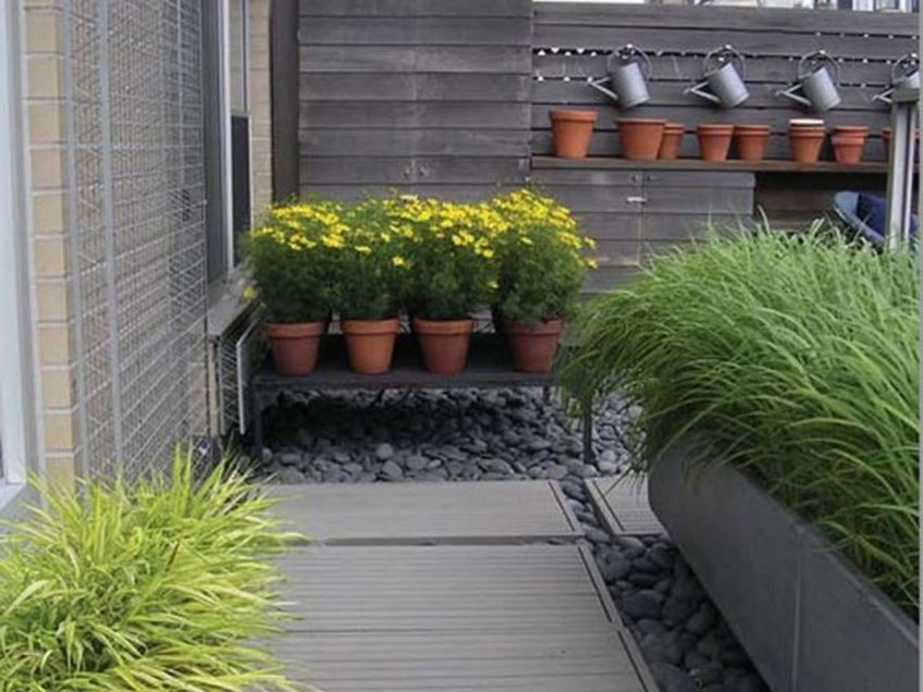 Beautiful Plant Idea For Terrace Garden