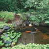 Decorative Backyard Garden Pond Design