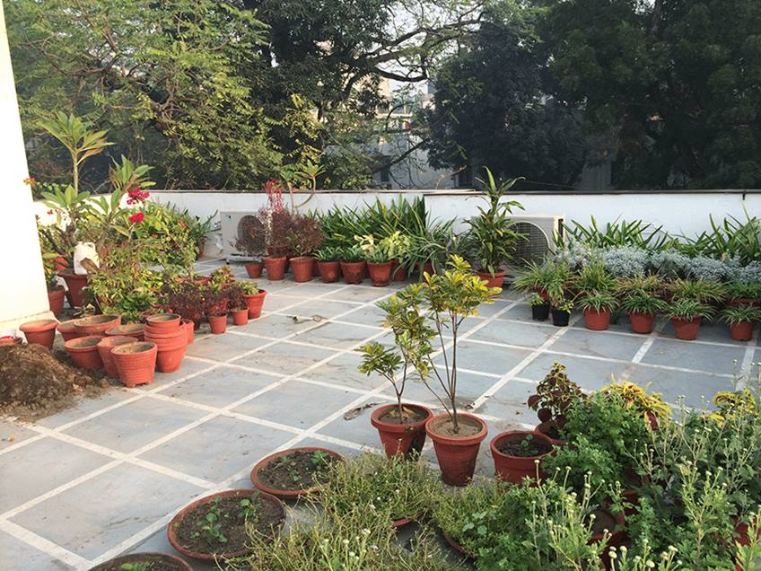 Fresh Home Terrace Garden Design