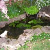 Minimalist Pond For Backyard Garden Decor