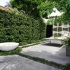 Plants Idea For Minimalist Urban Garden
