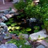 Small Pond Design For Garden Decor