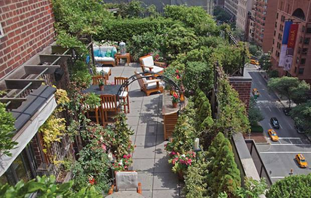 Urban Home Garden On Rooftop