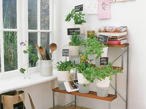 Minimalist Indoor Garden For Home Decoration