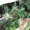 Small Home Indoor Garden Landscaping