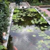 Tips To Build Small Pond Design